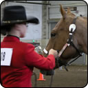Horse Show Patterns: New Features