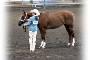 HorseShowPatterns.com